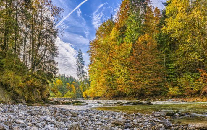 Bachlauf im Wald